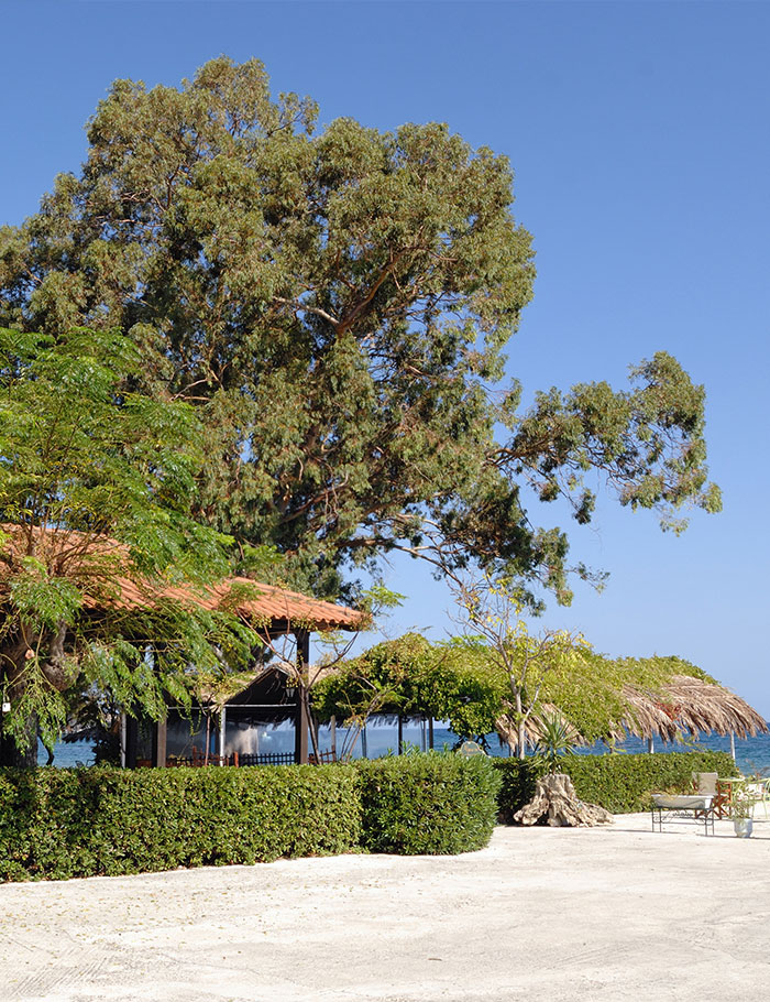 Mimoza Beach Resort | Beach Bar
