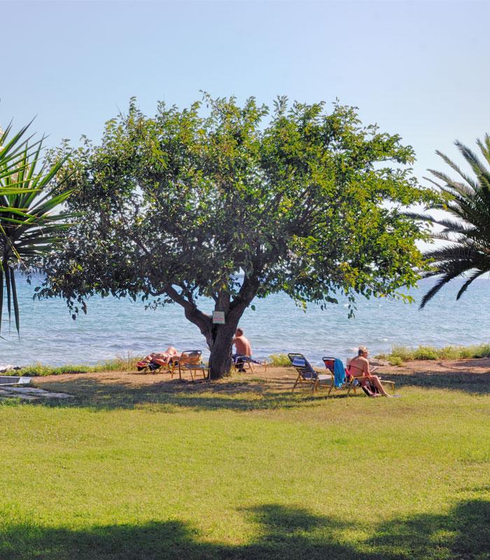 Mimoza Beach Hotel | Beach